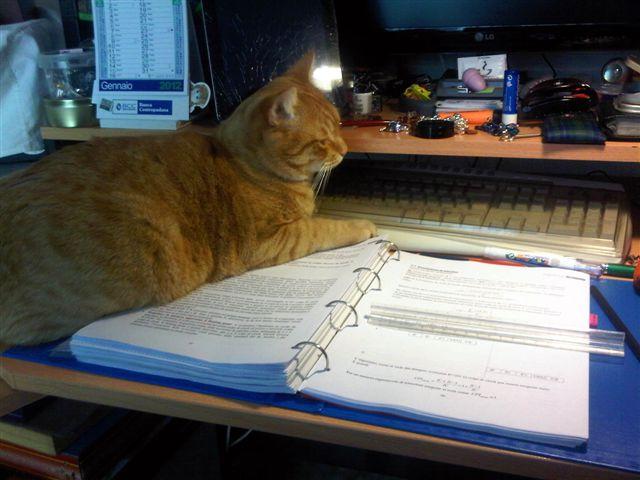 Ginger sugli appunti di architetture (1)