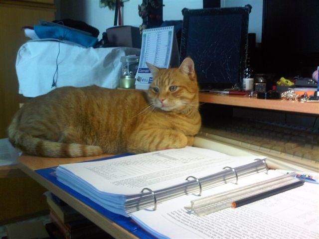 Ginger sugli appunti di architetture (2)