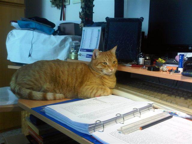 Ginger sugli appunti di architetture (3)