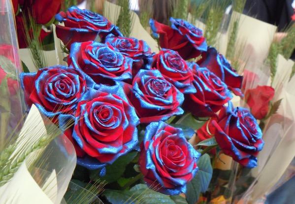 rose blaugrana