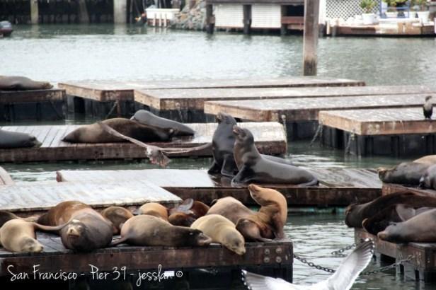 san francisco leoni marini pier 39