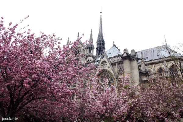 parigi - notre dame (2)